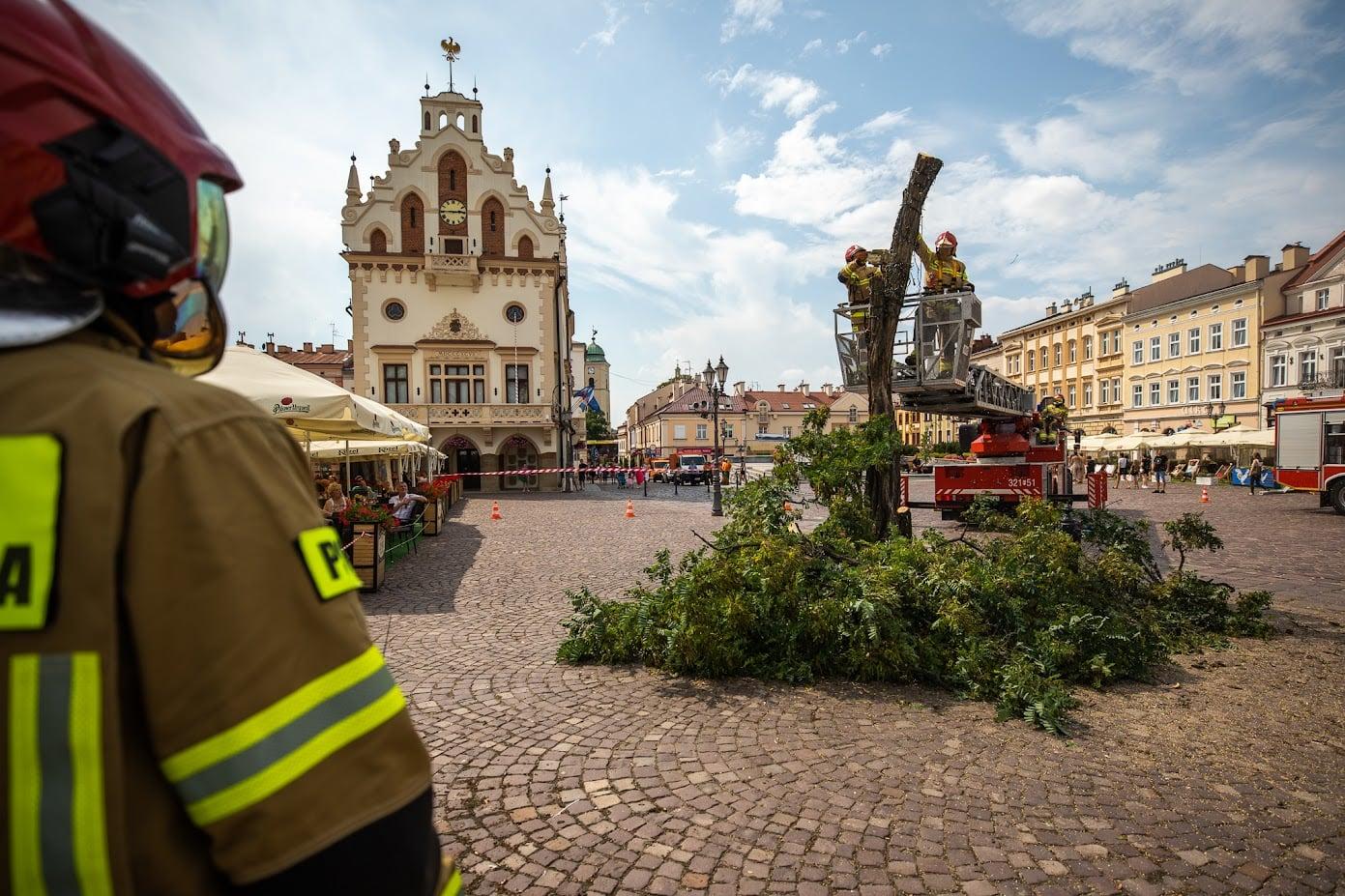 Złamana akacja znika z Rynku. Konrad Fijołek deklaruje posadzenie nowego drzewa [ZDJĘCIA] - Zdjęcie główne