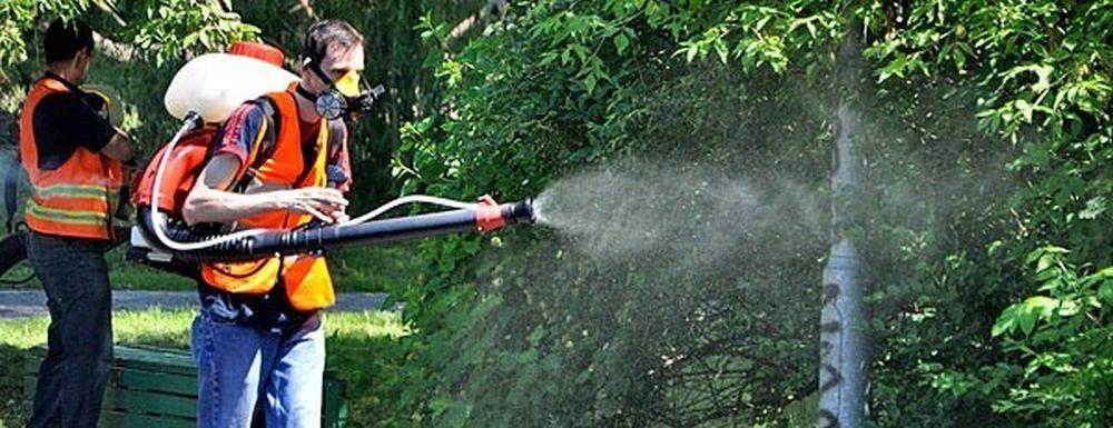 Plaga komarów uprzykrza życie w Tarnobrzegu. Kolejna próba odkomarzania [AKTUALIZACJA] - Zdjęcie główne