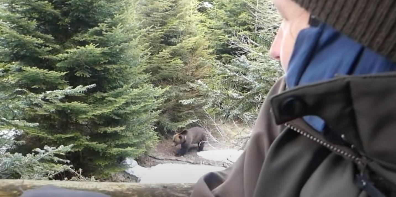 Zobaczcie bieszczadzkie spotkania z niedźwiedziami [WIDEO] - Zdjęcie główne