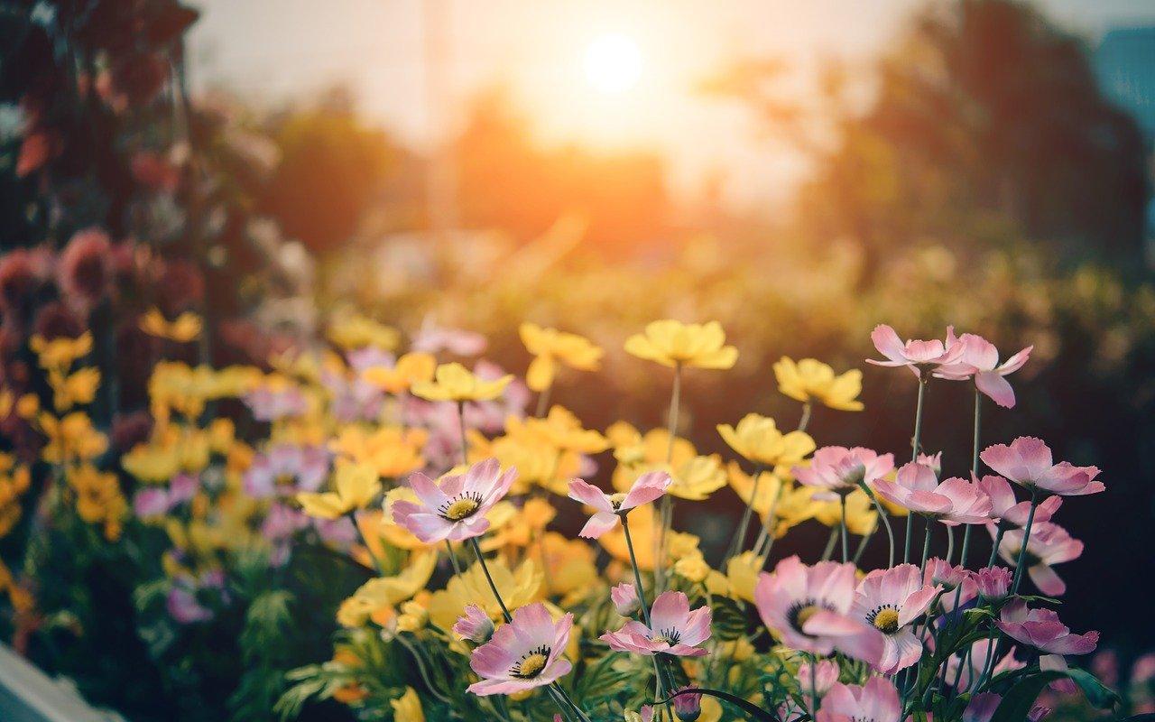 W Rzeszowie powstaną ogrody kieszonkowe [WIZUALIZACJE] - Zdjęcie główne