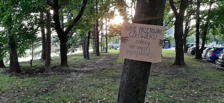 """Przeszkadza ci wycinka drzew w mieście? Od dzisiaj w Rzeszowie zieleń będzie """"pod specjalnym nadzorem""""! - Zdjęcie główne"""