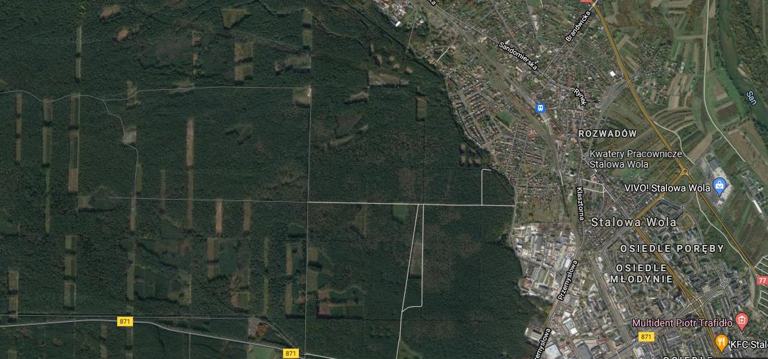 TYSIĄC hektarów lasu do wycięcia w Stalowej Woli? Sejm przyjął specustawę - Zdjęcie główne