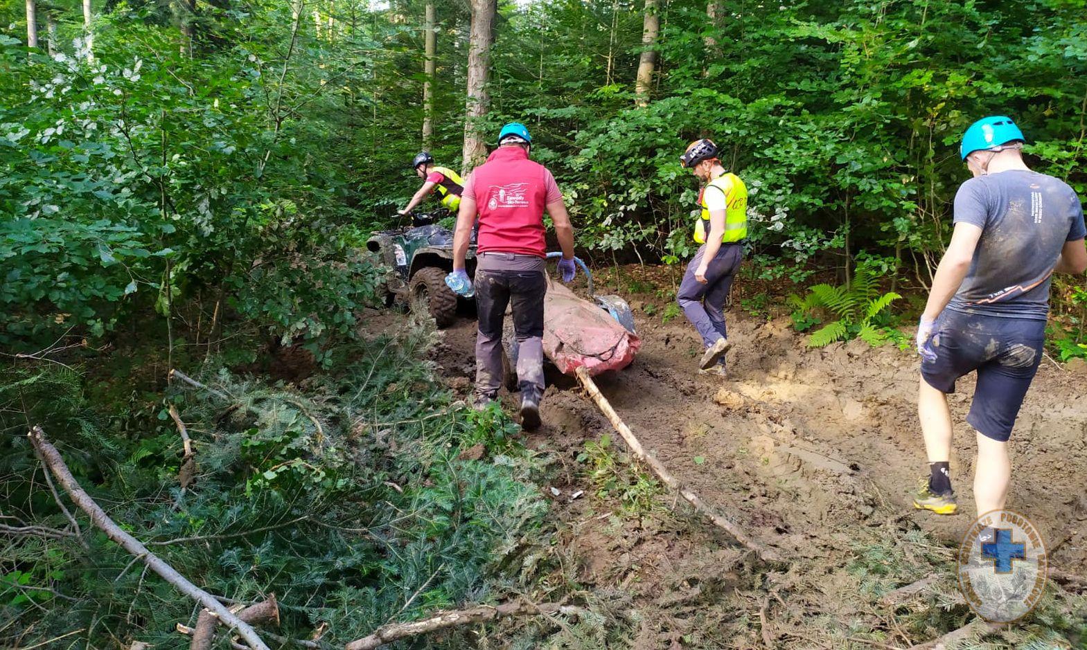 TRAGEDIA podczas prac w lesie! Drzewo runęło na mężczyznę! - Zdjęcie główne