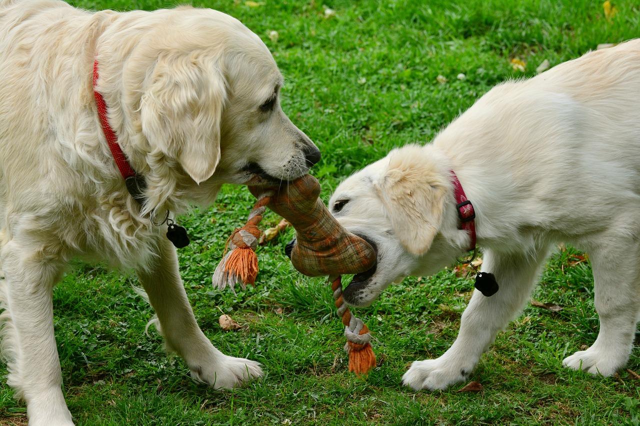 Psie wybiegi w Rzeszowie zamknięte na trzy tygodnie - Zdjęcie główne