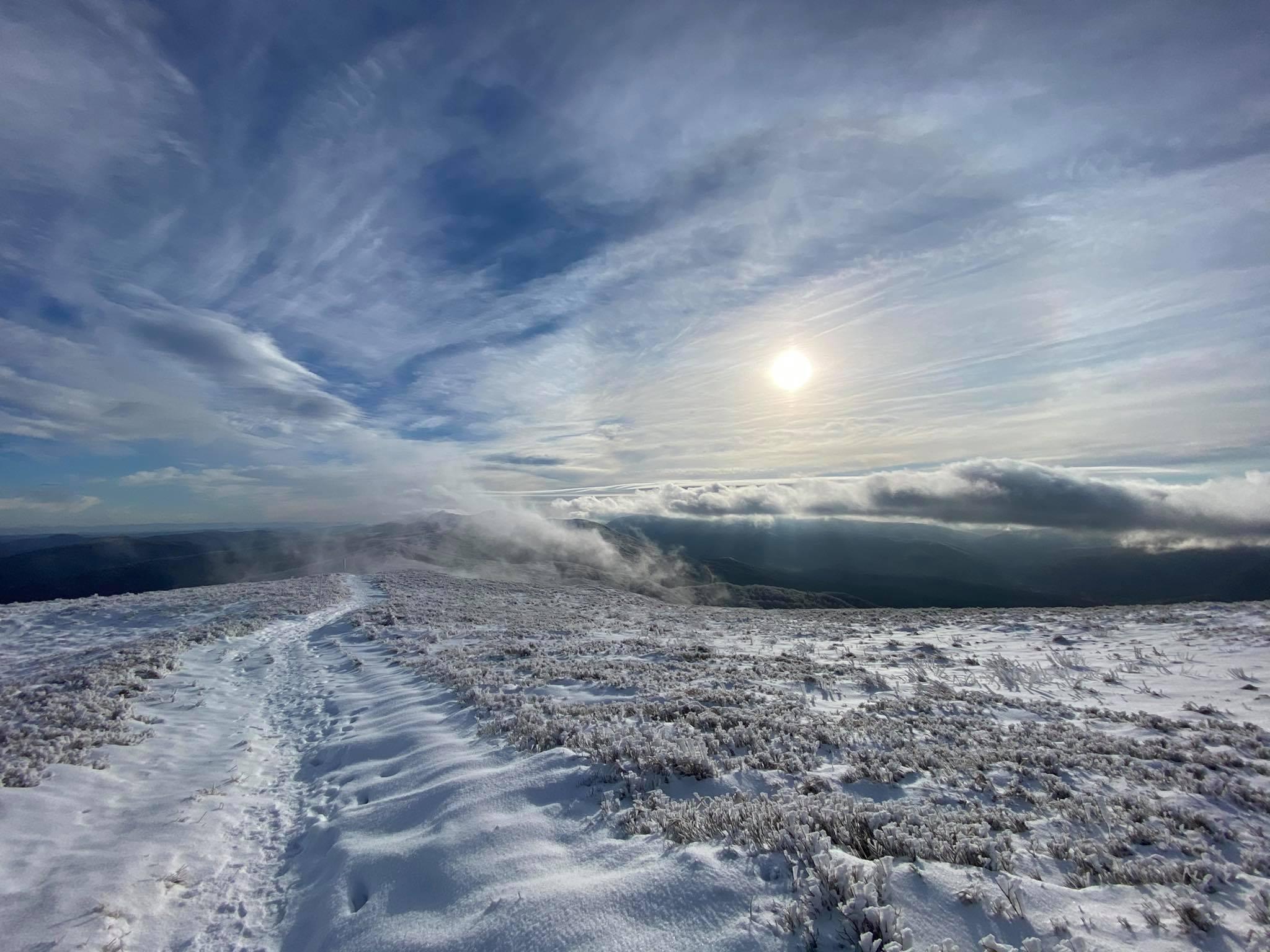 Smerek w zimowej szacie - Zdjęcie główne