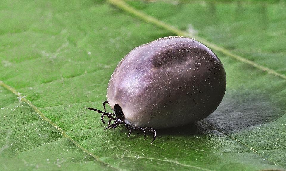Sezon na kleszcze - jak chronić nasze zwierzaki przed tymi pajęczakami - Zdjęcie główne
