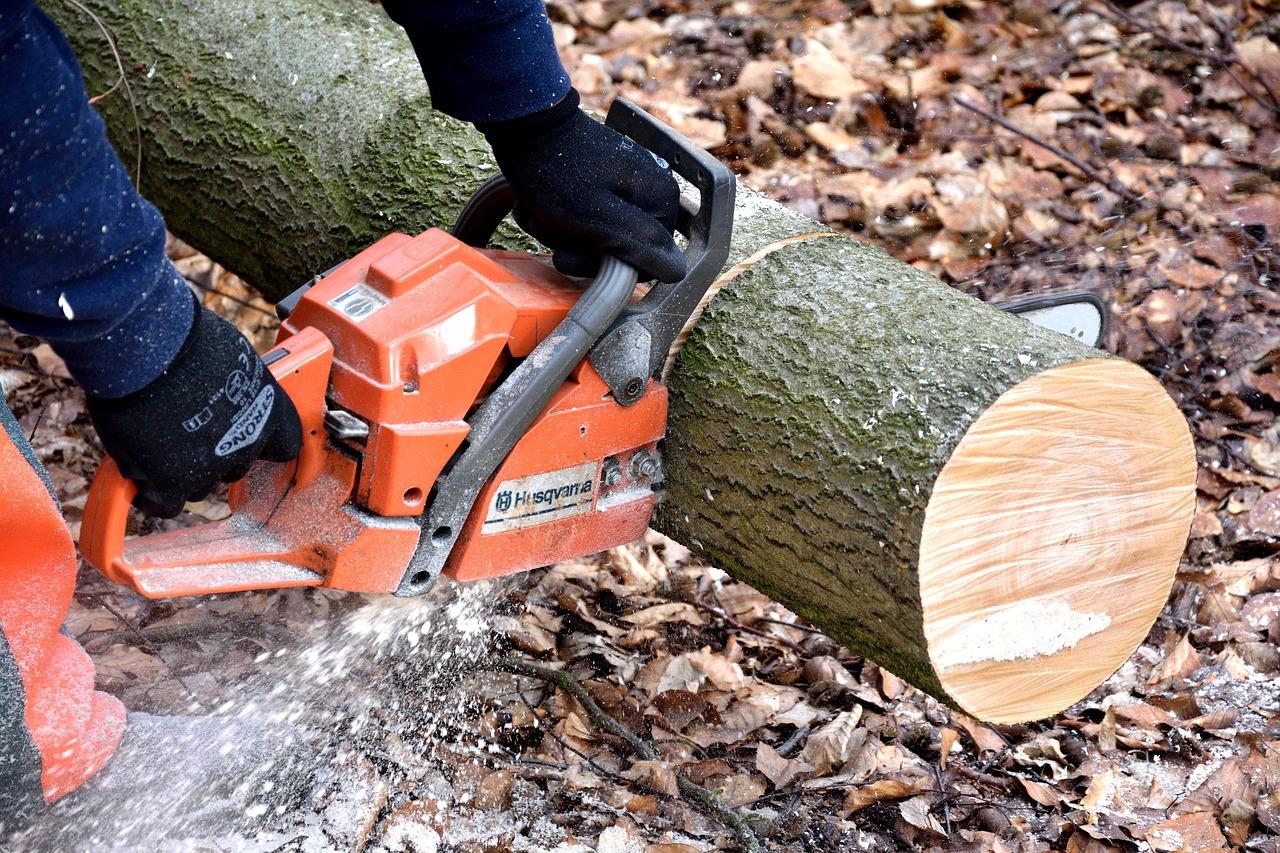 Tragedia podczas wycinki drzew. Znane są nowe fakty [AKTUALIZACJA] - Zdjęcie główne