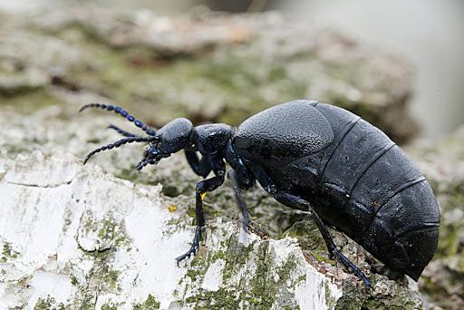 Mała kropelka, która może zabić! Uważajcie na te owady! - Zdjęcie główne