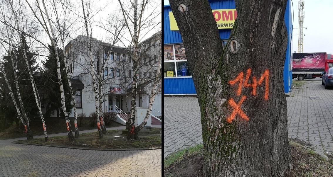 Kilkadziesiąt drzew do wycięcia i czasowe zamknięcia ulic - Zdjęcie główne
