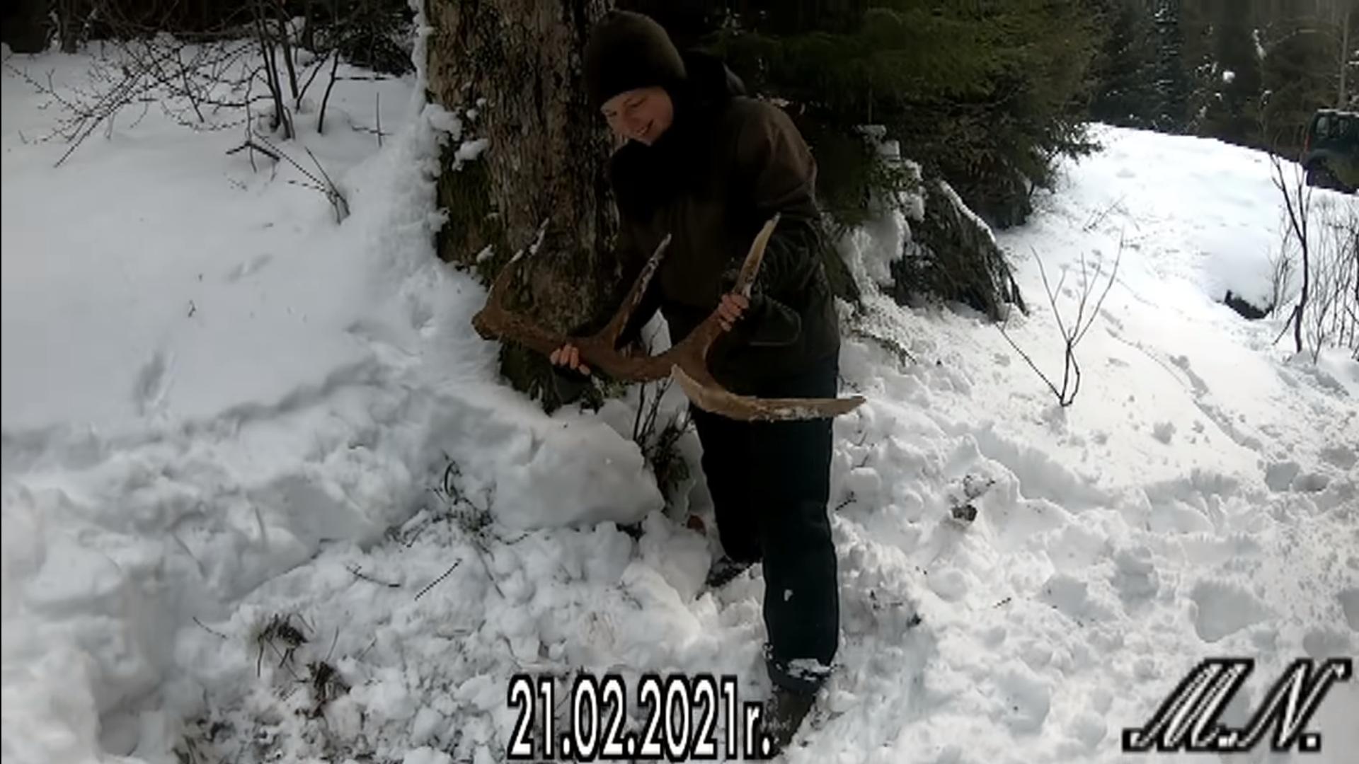 W Bieszczadach znalazła 3kg poroże jelenia! Zobacz nagranie - Zdjęcie główne