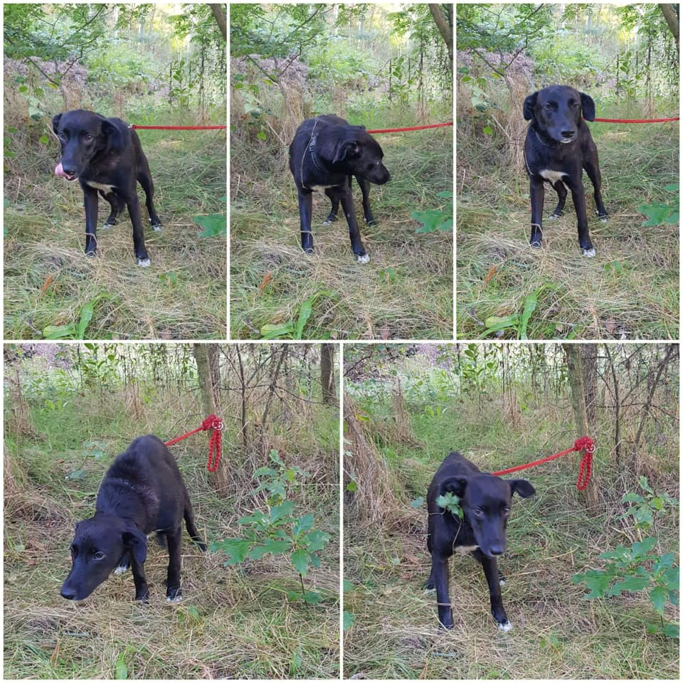 Pomoc dla czworonoga w Żupawie! Pies przywiązany do drzewa w środku lasu!  - Zdjęcie główne