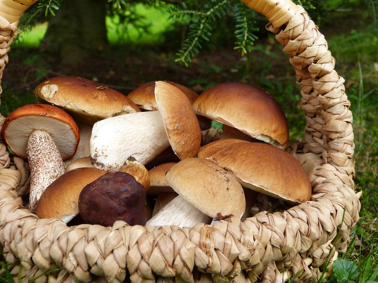 Ogromny wysyp grzybów w podkarpackich lasach. Co musisz wiedzieć o grzybobraniu? [ZDJĘCIA] - Zdjęcie główne