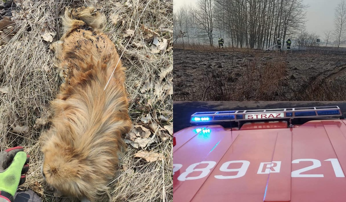 Pies uwięziony przez pożar trawy. Mógł spłonąć żywcem! - Zdjęcie główne