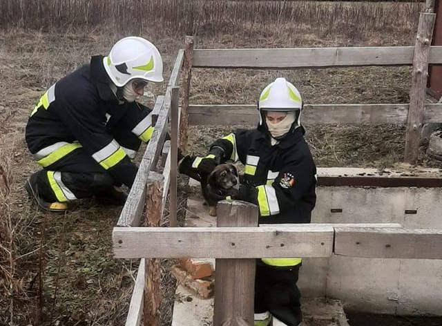 Pies wpadł do studzienki. Na pomoc ruszyli strażacy - Zdjęcie główne