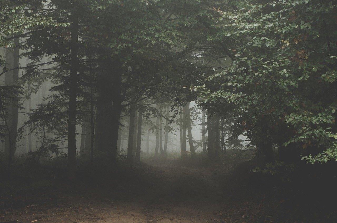 Zwłoki mężczyzny w lesie! Nieszczęśliwy wypadek czy zabójstwo? - Zdjęcie główne