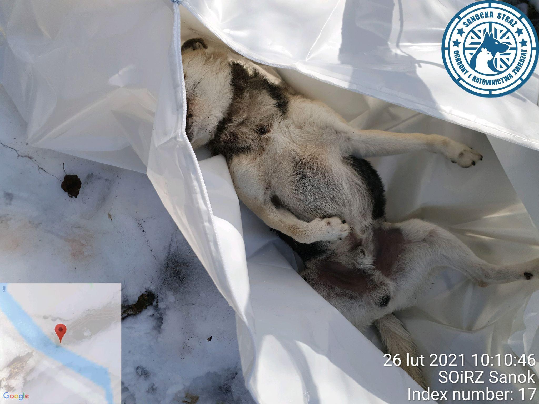 MAKABRA! Zastrzelił psa, a ciało czworonoga porzucił w lesie! - Zdjęcie główne