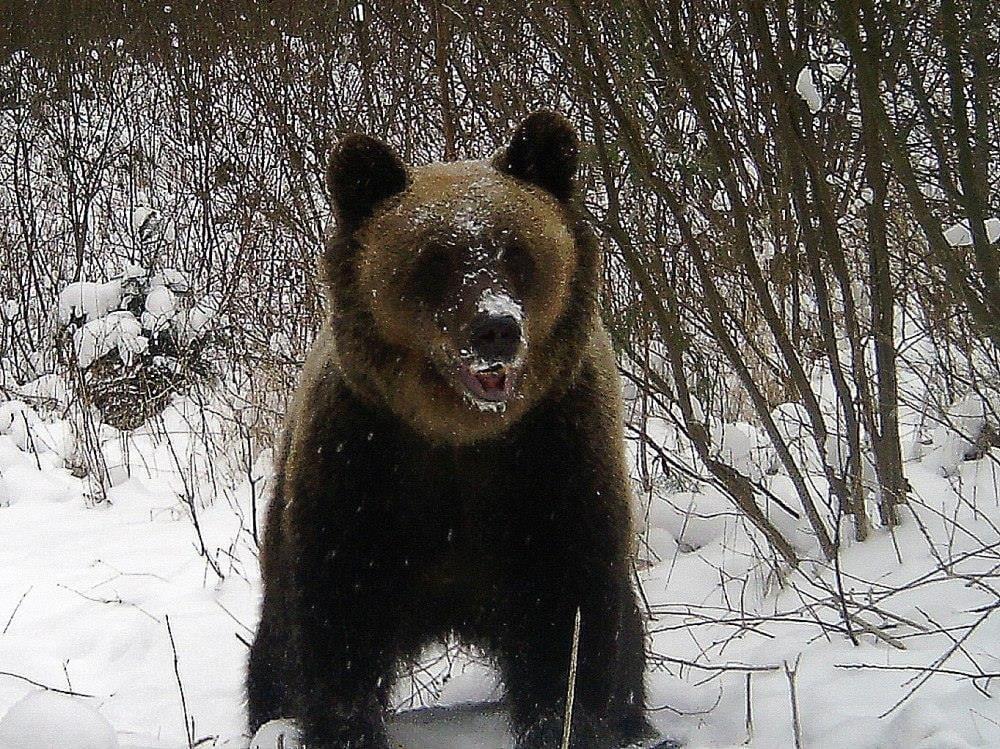 Niedźwiadki korzystają z uroków zimy - Zdjęcie główne