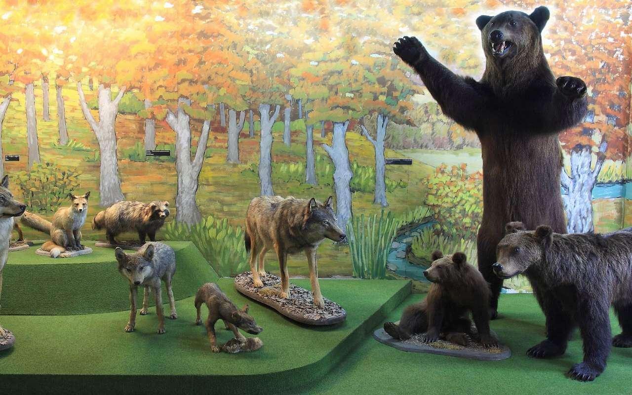 Niedźwiedź zabity przez premiera? - Zdjęcie główne