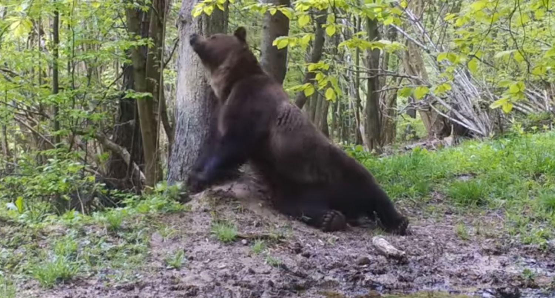 Błotniste SPA niedźwiedzia [WIDEO] - Zdjęcie główne