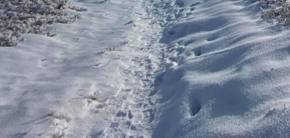 Zima zaskoczyła nielegalnych imigrantów z Afryki! Szli bez butów po śniegu! - Zdjęcie główne