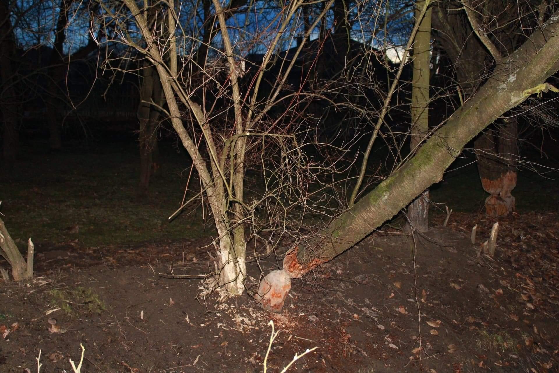 Wichura niszczy drzewa na Podkarpaciu - Zdjęcie główne