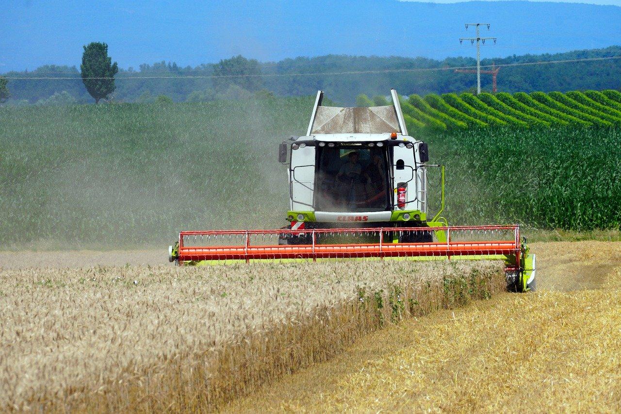 Dramat rolników! Wzrosną ceny chleba!  - Zdjęcie główne