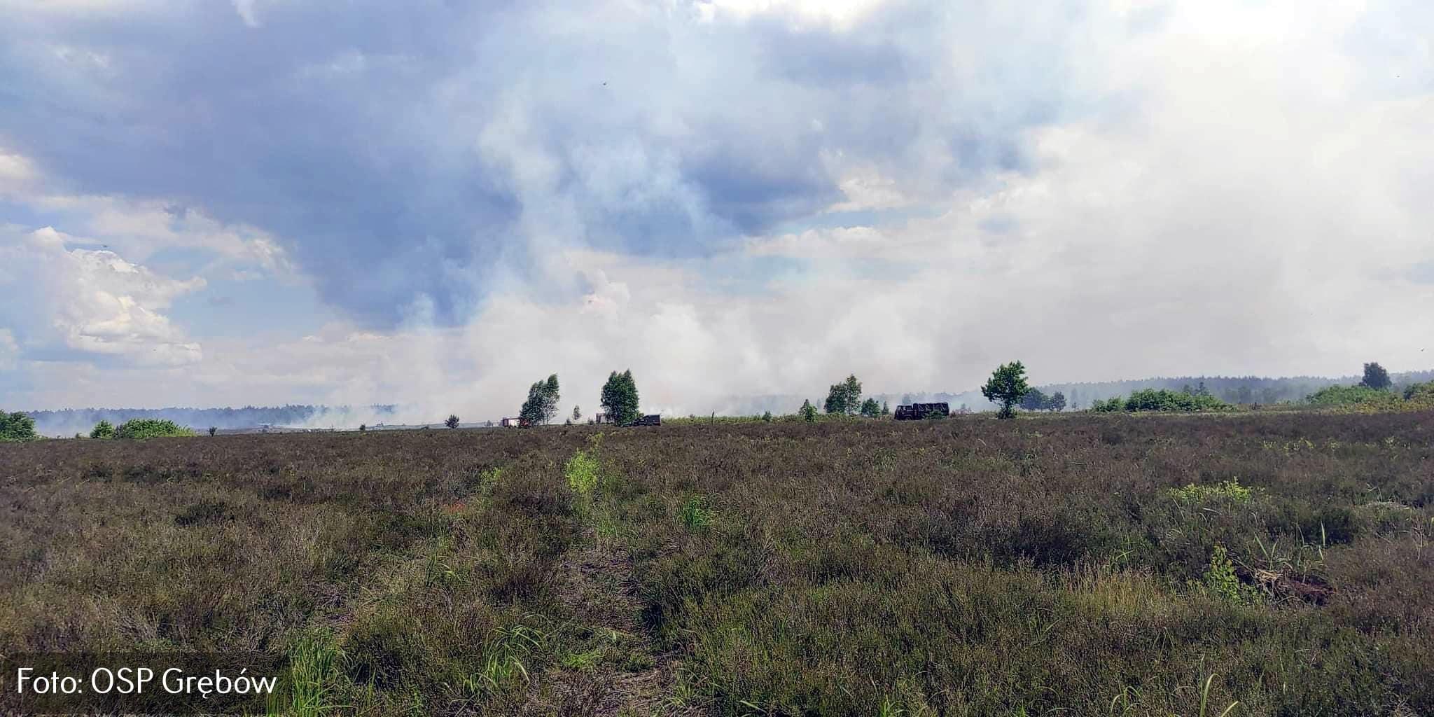 Ogień na poligonie wojskowym w Nowej Dębie! Znana jest przyczyna wzniecenia pożaru [AKTUALIZACJA, ZDJĘCIA] - Zdjęcie główne