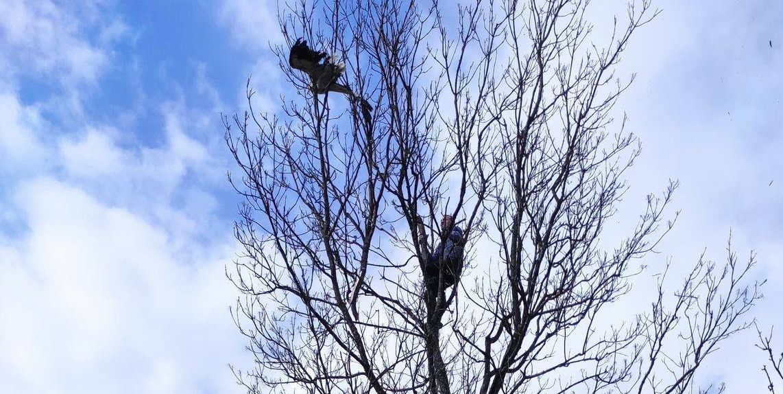 Sołtys ruszył na ratunek... bocianowi. Ptak był uwięziony na wysokości 14 metrów! [ZDJĘCIA] - Zdjęcie główne