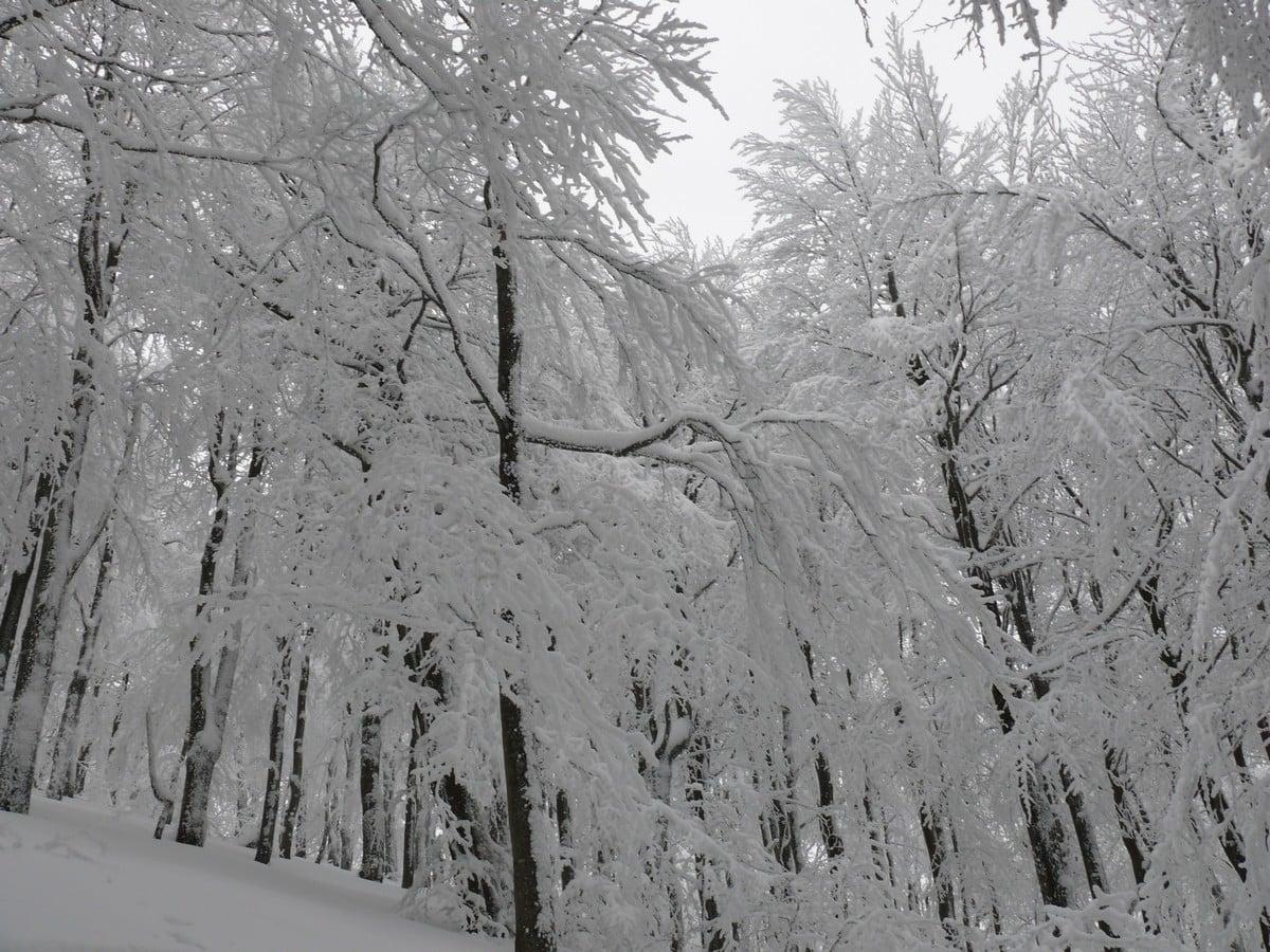 Szlaki w Bieszczadach ponownie otwarte - Zdjęcie główne