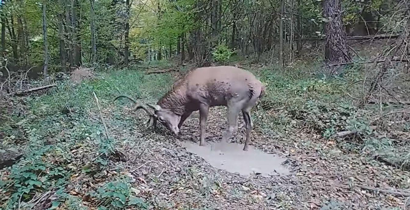 Mnóstwo gości na leśnej ścieżce. Zobaczcie niesamowite nagranie [WIDEO] - Zdjęcie główne