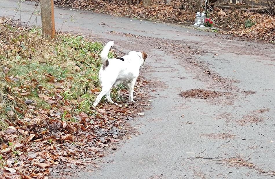 Psa i śmieci porzucili w lesie w Płazówce  - Zdjęcie główne
