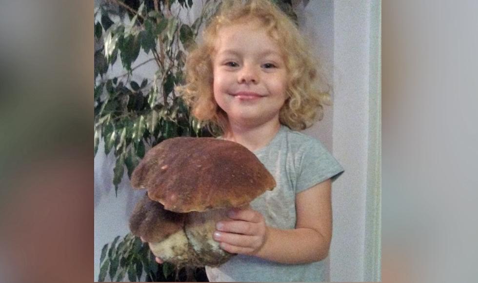 Takie grzyby zbiera się w Niwiskach. Zobaczcie zdjęcia naszej Czytelniczki - Zdjęcie główne