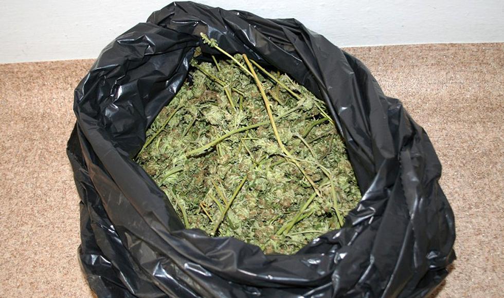 Z PODKARPACIA: Trzymał w domu 7 kg marihuany. Konopie uprawiał w lesie  - Zdjęcie główne