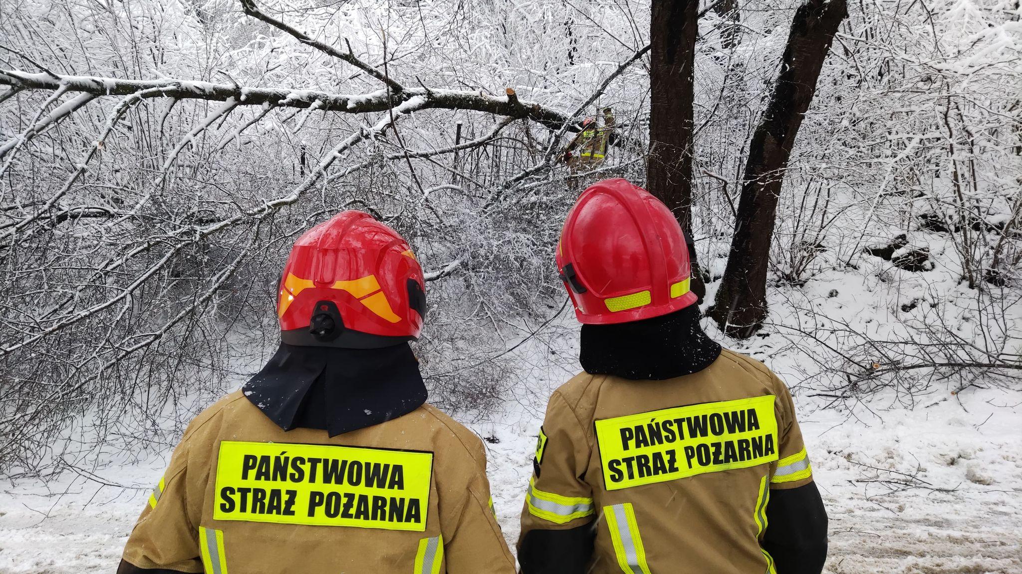 Powalone drzewa na drogach. Interwencje straży - Zdjęcie główne