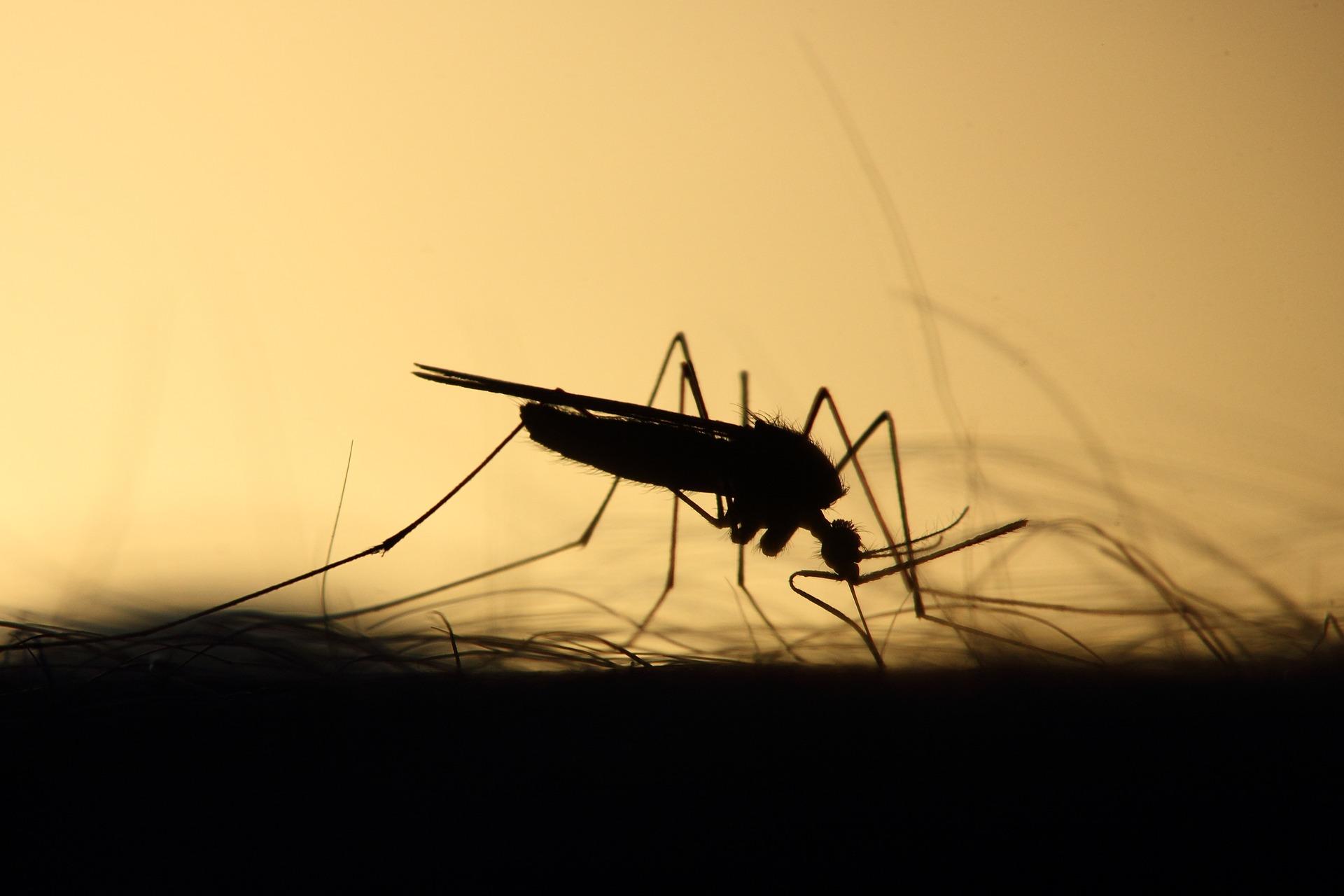 Gmina Kolbuszowa ma ekologiczny pomysł na komary. Co z opryskami?  - Zdjęcie główne