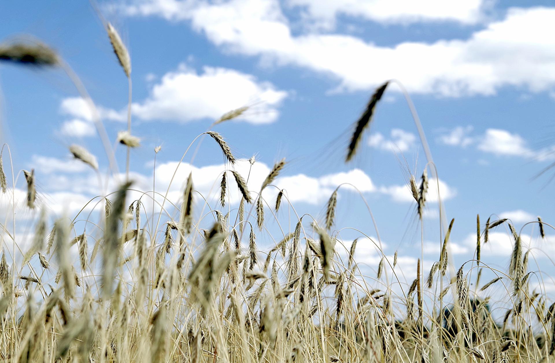 Lasowiackie Dożynki w Hucie Przedborskiej  - Zdjęcie główne