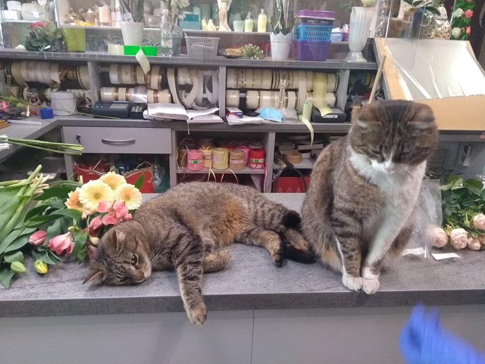 KOLBUSZOWA. Zaginął kot. Właściciele proszą o pomoc [FOTO] - Zdjęcie główne