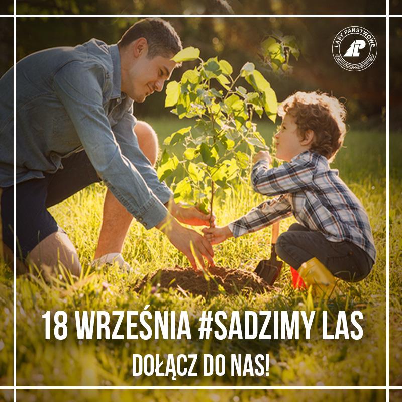 Akcja #sadziMy 2020. Odbierz swoje drzewko - Zdjęcie główne