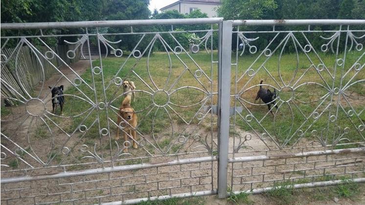 Psy na ulicy Wiktora w Kolbuszowej wciąż grasują. Co na to policja?  - Zdjęcie główne