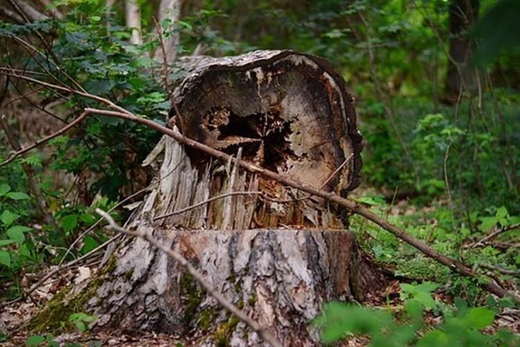 Podkarpacie. Tragedia przy wycince drzewa. 56-latek został uderzony konarem w głowę - Zdjęcie główne