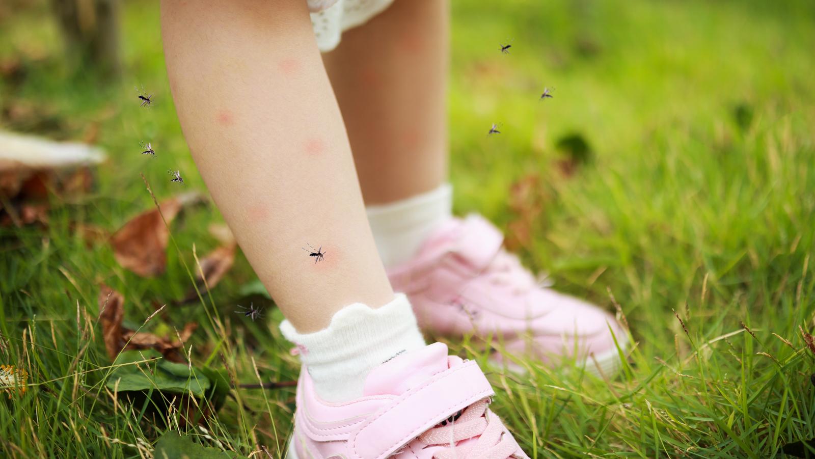 Domowe sposoby na komary i kleszcze. Znasz je wszystkie? - Zdjęcie główne