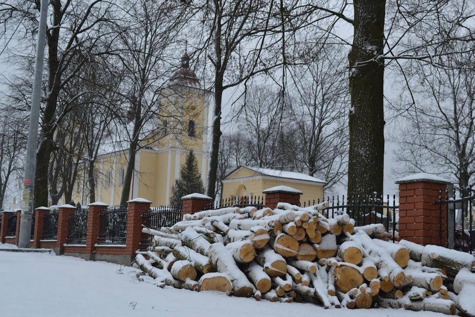 Majdan Królewski. Z cmentarza parafialnego usunięto stare drzewa  - Zdjęcie główne