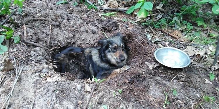 Poszukują oprawcy, który zakopał psa żywcem [ZDJĘCIA] - Zdjęcie główne
