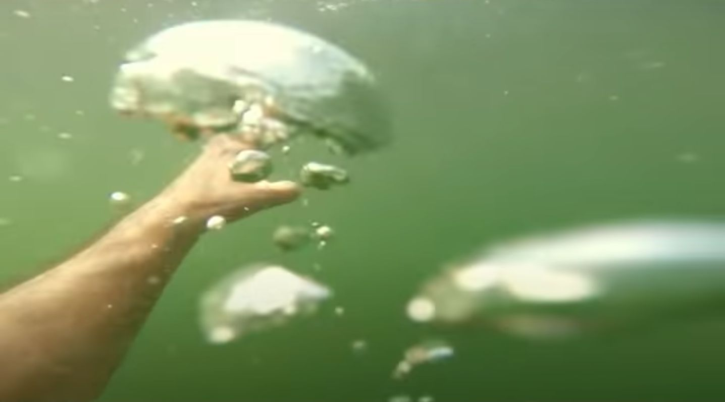 Podkarpacie: 7 minut DO ŚMIERCI pod wodą! Tak tonie człowiek! - Zdjęcie główne