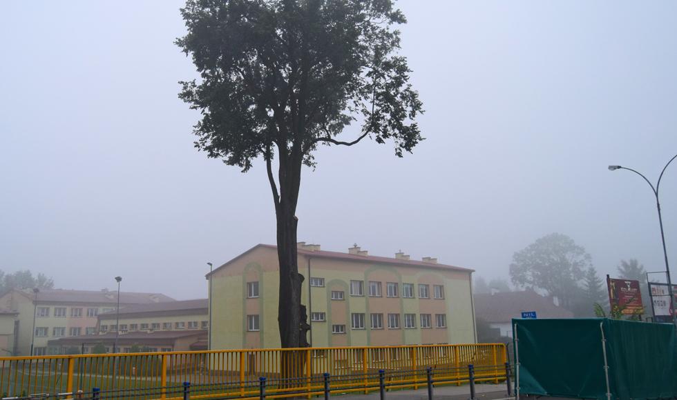 Ogromny konar ponad 200-letniego drzewa runął na teren placu szkolnego w Kolbuszowej - Zdjęcie główne