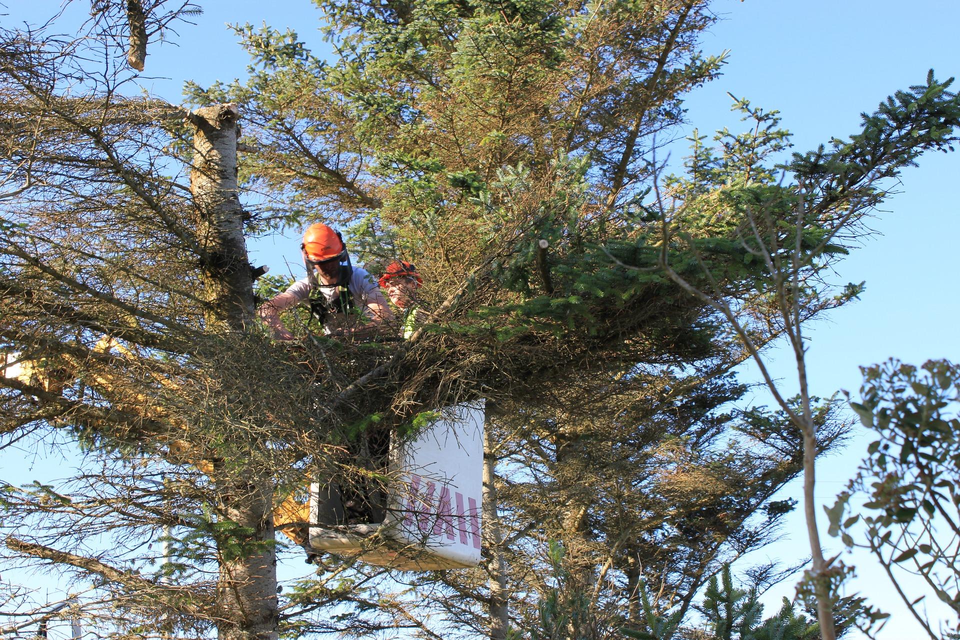 Michał Karkut: W wielu miejscach lasy przerzedzają się jak moje włosy na głowie - Zdjęcie główne
