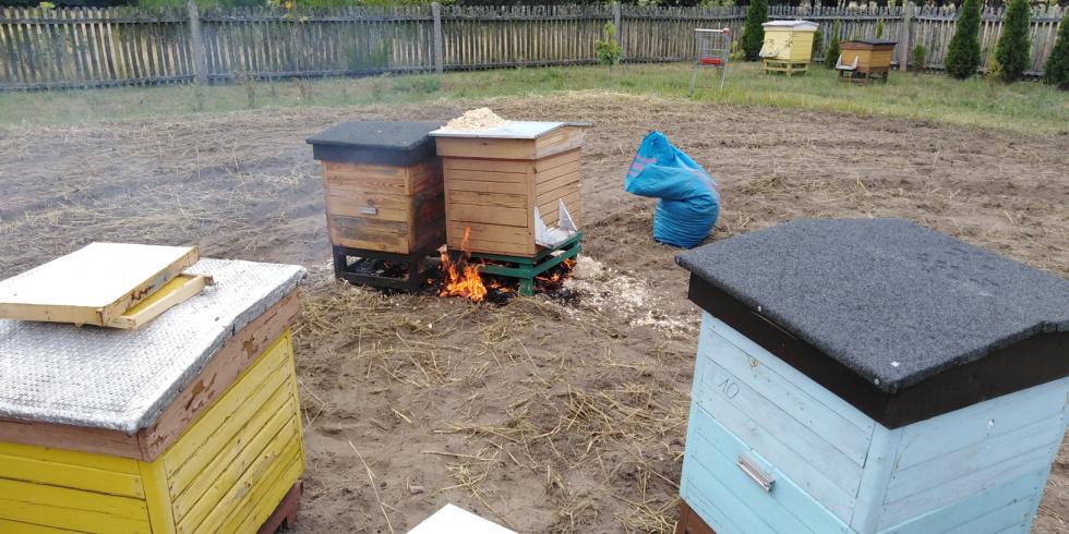 Trzeba było spalić ule razem z pszczołami. Dlaczego?  - Zdjęcie główne