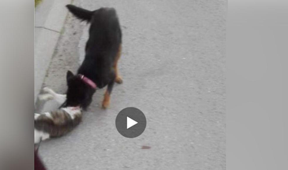 Jego pies miał zagryźć kota. Drastyczne nagranie trafiło do sieci a sprawa do sądu  - Zdjęcie główne