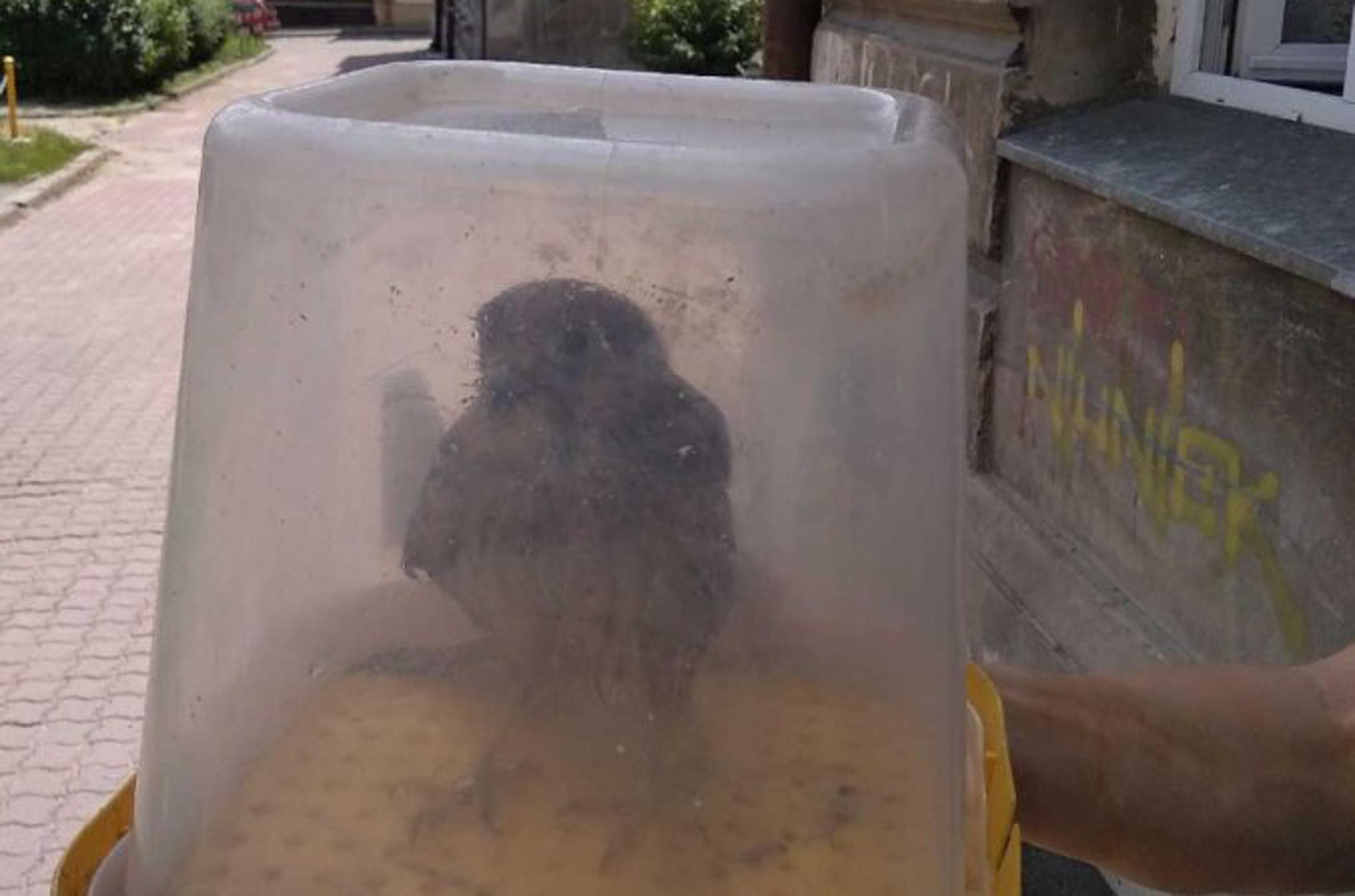 Z PODKARPACIA. Młody sokół wypadł z gniazda, które było na wysokości 15 metrów - Zdjęcie główne