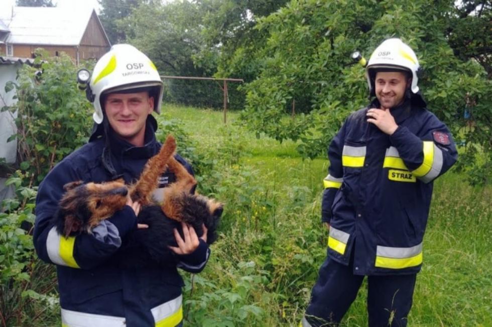 Z PODKARPACIA. Psiak był wycieńczony, pomogli mu strażacy - Zdjęcie główne